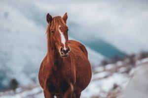 best horses names
